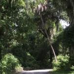 South Lake Trail - Near Kilarney Trailhead