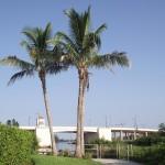 Venetian Waterway Park - Coconut Palms
