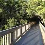 North Bay Trail - Weedon Island Tunnel of Mangrove Trees
