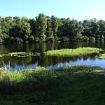 Little Econ Greenway - General Trail Shot