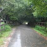 Suwannee River Greenway at Ivey Memorial Park