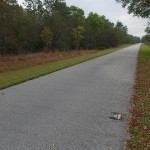 Withlacoochee State Trail - Mile Marker 4 Looking South