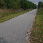 Withlacoochee State Trail - Mile Marker 39 Looking North