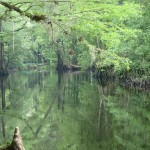 Withlacoochee State Trail - The River