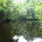 Withlacoochee State Trail - Slow Moving River