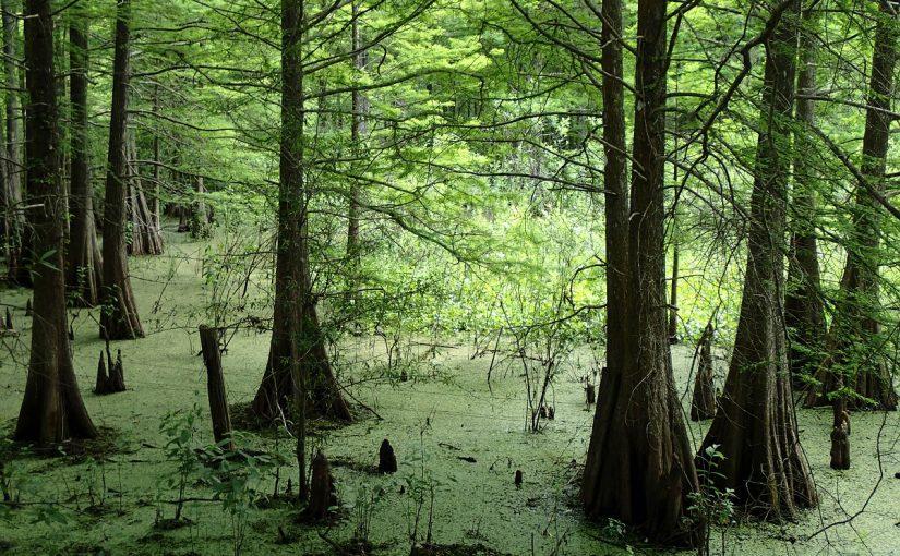 Withlacoochee State Trail – Croom Road Trailhead to Owensboro/Highway 301 Trailhead, Ridge Manor, Trilby – Hernando/Pasco County, Florida
